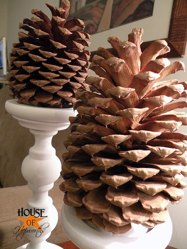 Christmas in may bake the bugs out of your pinecones for Large christmas pine cones